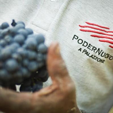 PoderNuovo_vendemmia2011_102