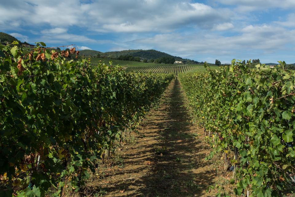 Wine-2013-243-of-3301