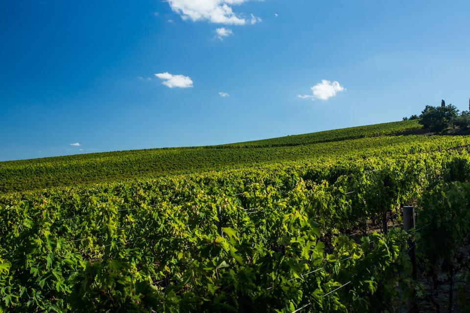 Wine-2013-497-of-3301
