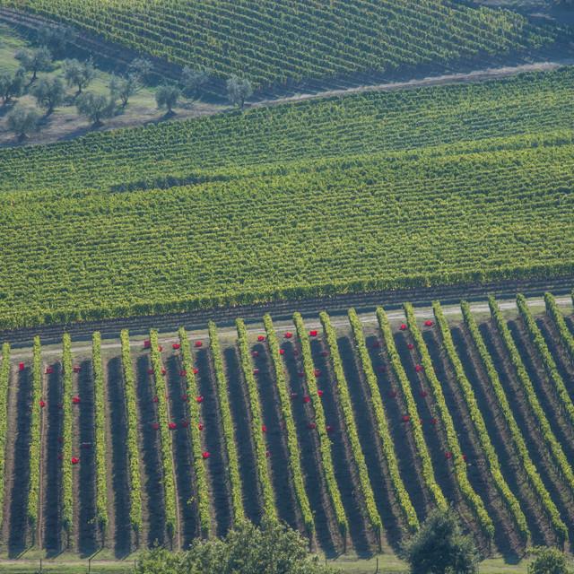 Wine 2013 (757 of 288)